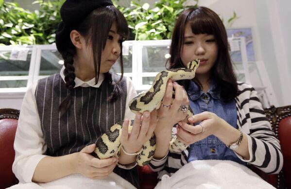 Những cô gái với con rắn tại Tokyo's Snake Center ở Nhật Bản - Sputnik Việt Nam