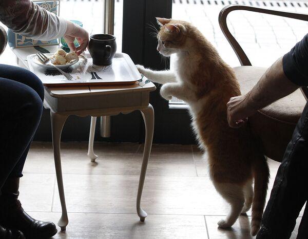 Thực khách đến quán Miau Cafe ở Warsaw  - Sputnik Việt Nam