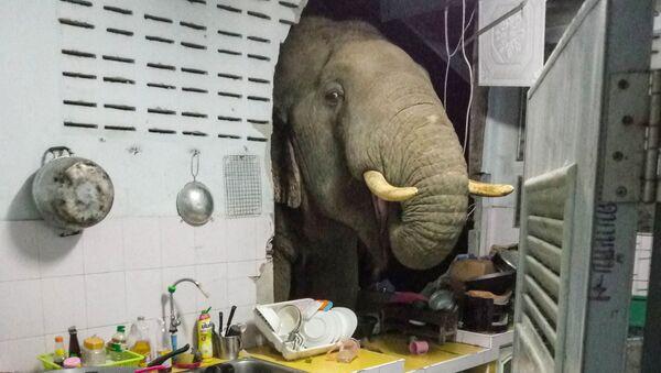 Con voi đạp thủng bức tường trong ngôi nhà dân ở Thái Lan - Sputnik Việt Nam