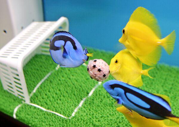 Những con cá chơi bóng trong thủy cung ở Yokohama, ngoại ô Tokyo - Sputnik Việt Nam