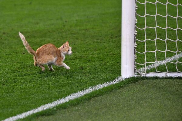 Con mèo đi ngang qua sân trong trận bóng đá tại sân vận động Juventus ở Turin - Sputnik Việt Nam