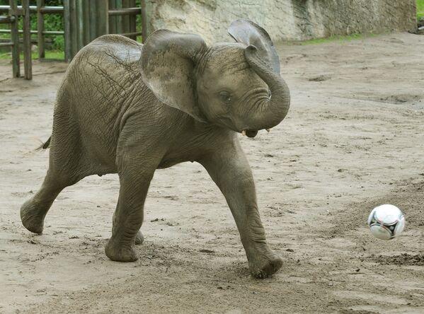 Con voi Nelly sút bóng vào khung thành Italia ở Công viên Serengeti, Đức - Sputnik Việt Nam