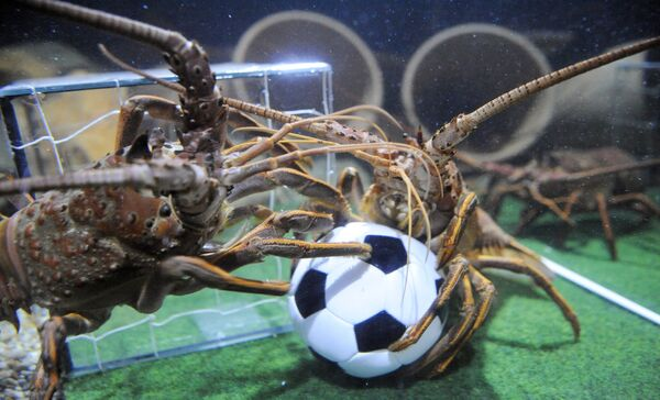 Hai con tôm rồng giành bóng trong hồ bơi kiểu sân bóng tại Thủy cung Sea Life ở Berlin - Sputnik Việt Nam