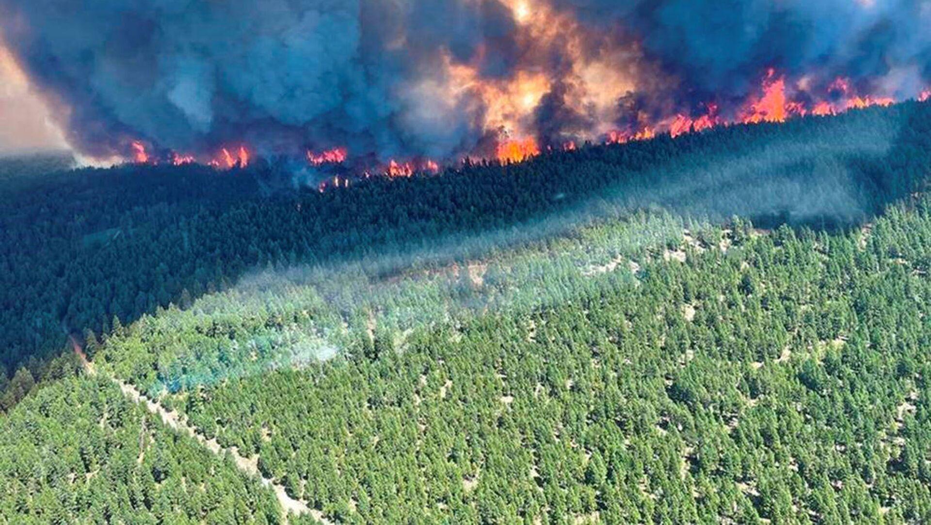 Cháy rừng ở miền tây Canada - Sputnik Việt Nam, 1920, 02.07.2021