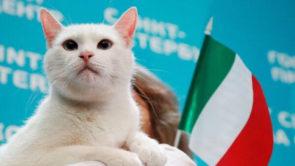 Mèo Achilles trong một sự kiện ở St.Petersburg - Sputnik Việt Nam
