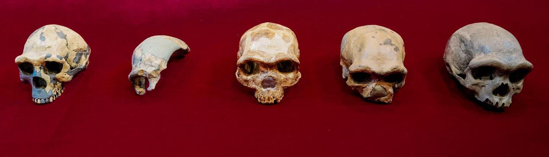 """Hộp sọ """"Người rồng"""". Các nhà khoa học Trung Quốc tiết lộ một nhánh riêng biệt của loài người - Sputnik Việt Nam, 1920, 16.07.2021"""