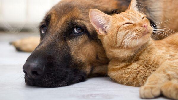 Chó và mèo - Sputnik Việt Nam