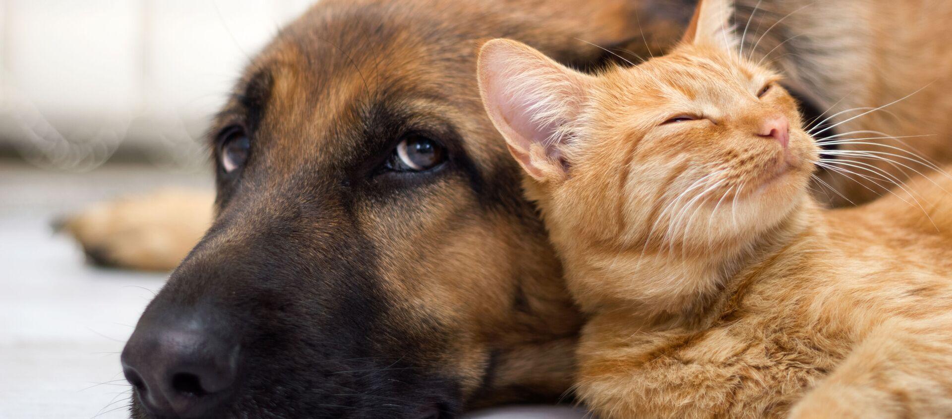 Chó và mèo - Sputnik Việt Nam, 1920, 22.07.2021