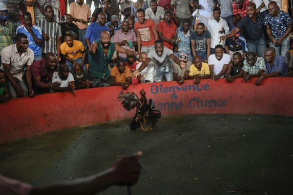 Chọi gà ở Port-au-Prince, Haiti - Sputnik Việt Nam