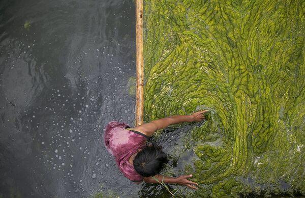 Công nhân làm sạch tảo khỏi ao Kamal Pokhari ở Kathmandu, Nepal - Sputnik Việt Nam