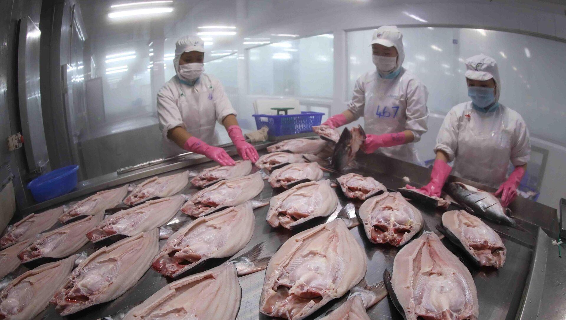 Cấp đông sản phẩm cá tra nguyên con xuất khẩu tại nhà máy chế biến thuỷ sản của Tập đoàn Sao Mai (An Giang) - Sputnik Việt Nam, 1920, 09.09.2021