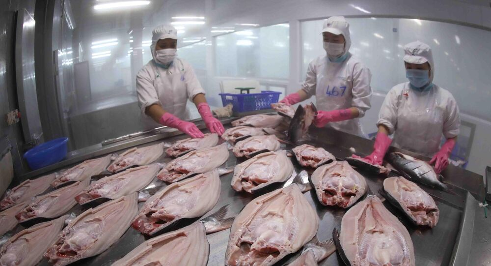 Cấp đông sản phẩm cá tra nguyên con xuất khẩu tại nhà máy chế biến thuỷ sản của Tập đoàn Sao Mai (An Giang)
