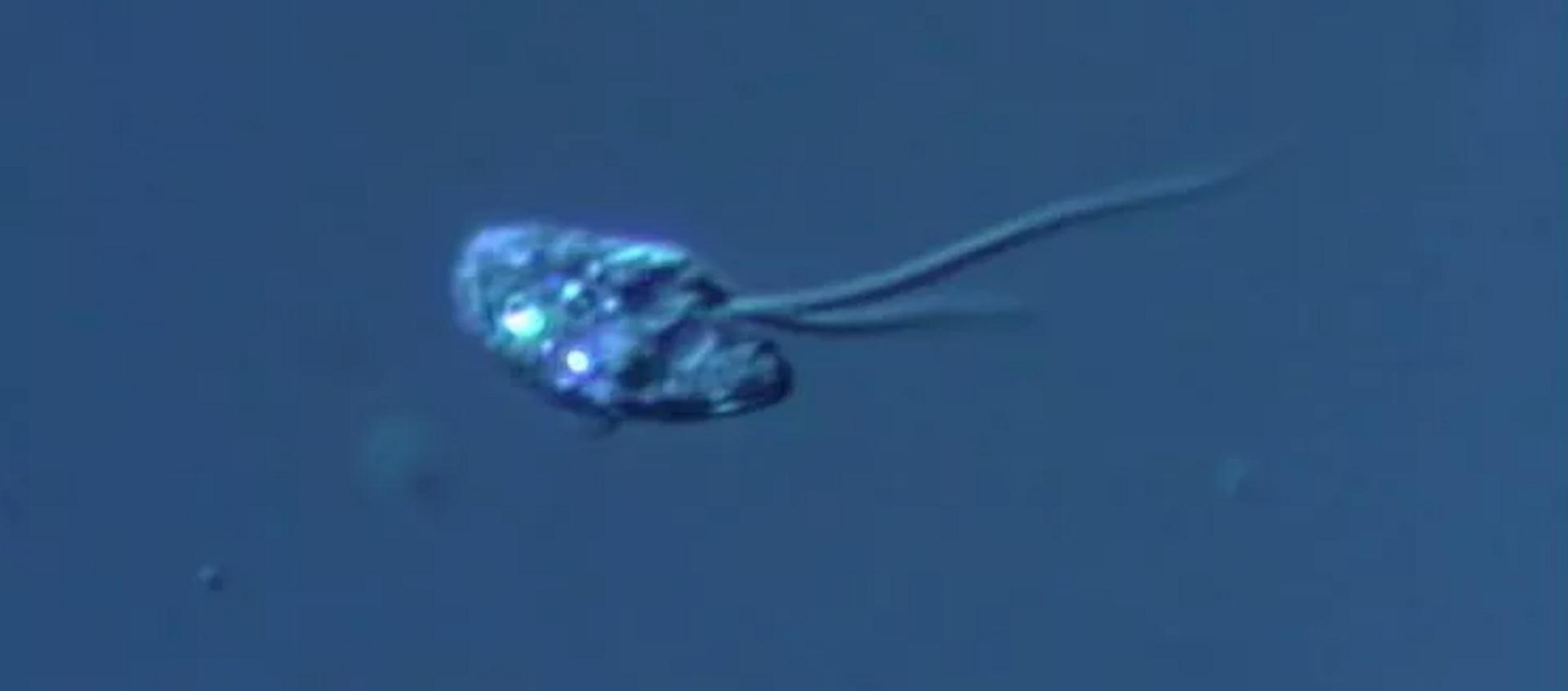 Một loài sinh vật đơn bào mới (Apiculatamorpha spiralis) - Sputnik Việt Nam, 1920, 03.08.2021