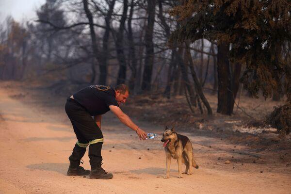 Người lính cứu hỏa đưa nước cho con chó trong trận cháy rừng ở ngoại ô phía bắc Athens - Sputnik Việt Nam