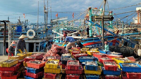 Giá hải sản thấp trong thời gian gần đây là do tình hình dịch COVID-19 khiến sức tiêu thụ giảm đáng kể. - Sputnik Việt Nam