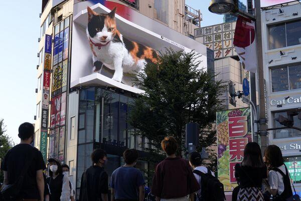 Quảng cáo video 3D với hình con mèo khổng lồ trong khu thương mại Shinjuku ở Tokyo - Sputnik Việt Nam
