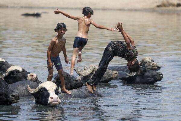 Các cậu bé Iraq bơi cùng đàn trâu trên sông - Sputnik Việt Nam