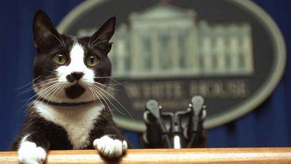 Con mèo tên là Socks của Tổng thống Bill Clinton nhìn lên bục trong phòng họp của Nhà Trắng, Washington - Sputnik Việt Nam
