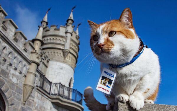 Con mèo Mostik nổi tiếng, biểu tượng quá trình xây dựng cầu Crưm - Sputnik Việt Nam