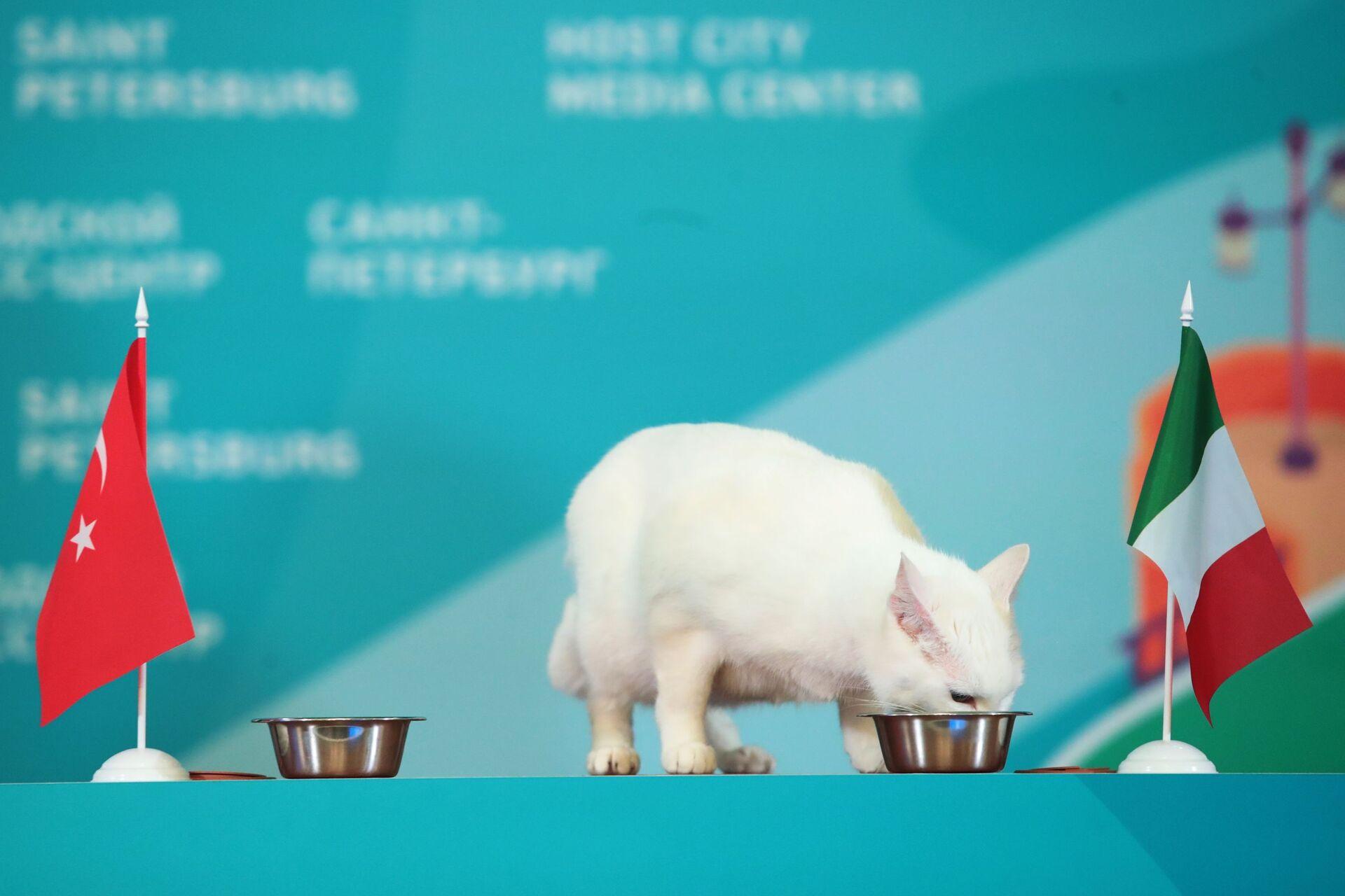 Chú mèo tiên tri Achilles của Bảo tàng Hermitage (Nga) dự đoán chiến thắng của ĐTQG Italia tại EURO - Sputnik Việt Nam, 1920, 05.10.2021