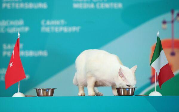 Chú mèo tiên tri Achilles của Bảo tàng Hermitage (Nga) dự đoán chiến thắng của ĐTQG Italia tại EURO - Sputnik Việt Nam