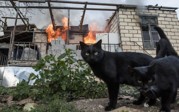 Những con mèo gần ngôi nhà đang bốc cháy ở làng Karegakh ở Nagorno-Karabakh - Sputnik Việt Nam