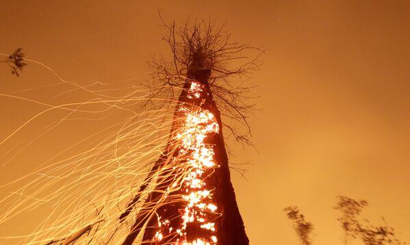 Cây cháy rực ở Brazil - Sputnik Việt Nam