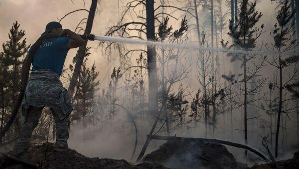 Một nhân viên của Bộ Tình trạng Khẩn cấp của Liên bang Nga trong khi dập tắt đám cháy rừng ở Yakutia - Sputnik Việt Nam