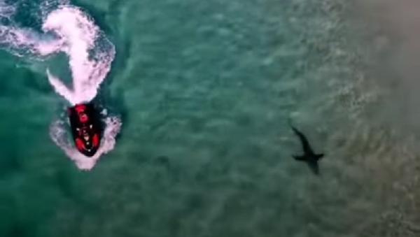 Quay video cảnh cá mập dài ba mét suýt hất người đàn ông ngã khỏi mô tô nước  - Sputnik Việt Nam