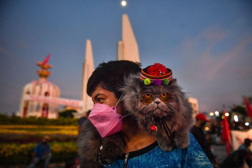 Mèo ngồi trên vai theo người đi biểu tình ở Bangkok đòi Thủ tướng Thái Lan từ chức