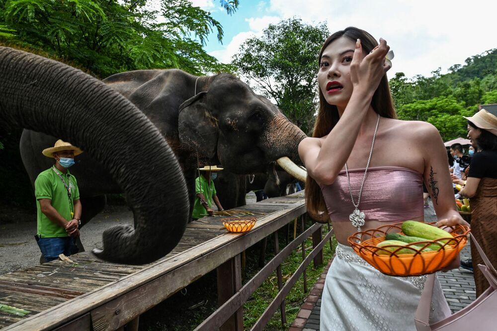 Cô gái cho voi ăn ở Thung lũng Voi hoang, Khu Bảo tồn thiên nhiên ở tỉnh Vân Nam, tây-nam Trung Quốc