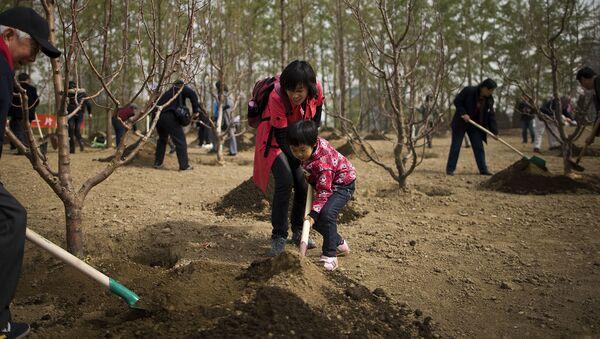Người Trung Quốc trồng cây xanh - Sputnik Việt Nam