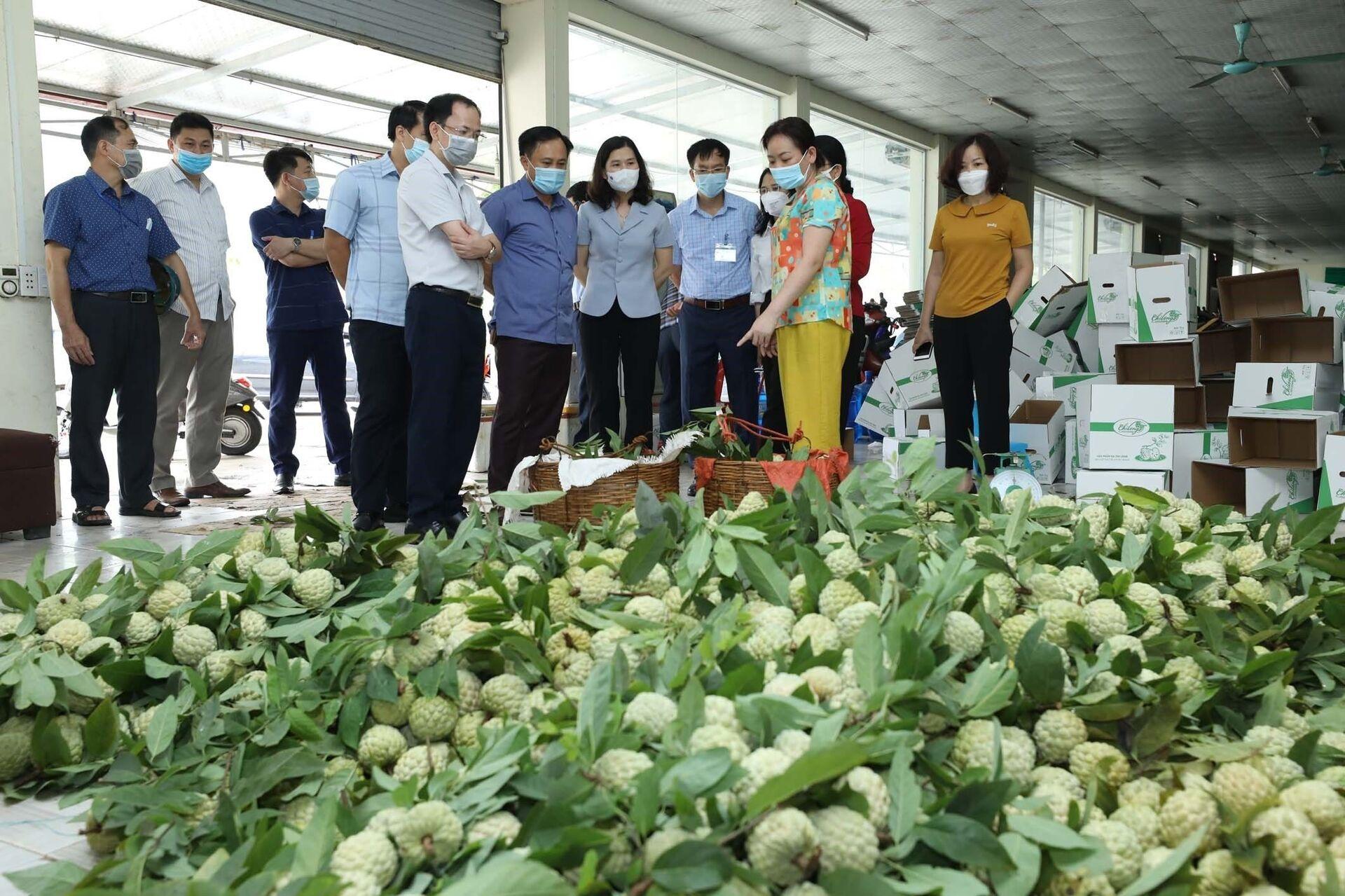 Hiện nay, na tiêu chuẩn VietGAP của Hợp tác xã nông sản huyện Chi Lăng đã bắt đầu cho thu hoạch nhưng việc tiêu thụ bị ảnh hưởng do dịch COVID-19. - Sputnik Việt Nam, 1920, 05.10.2021