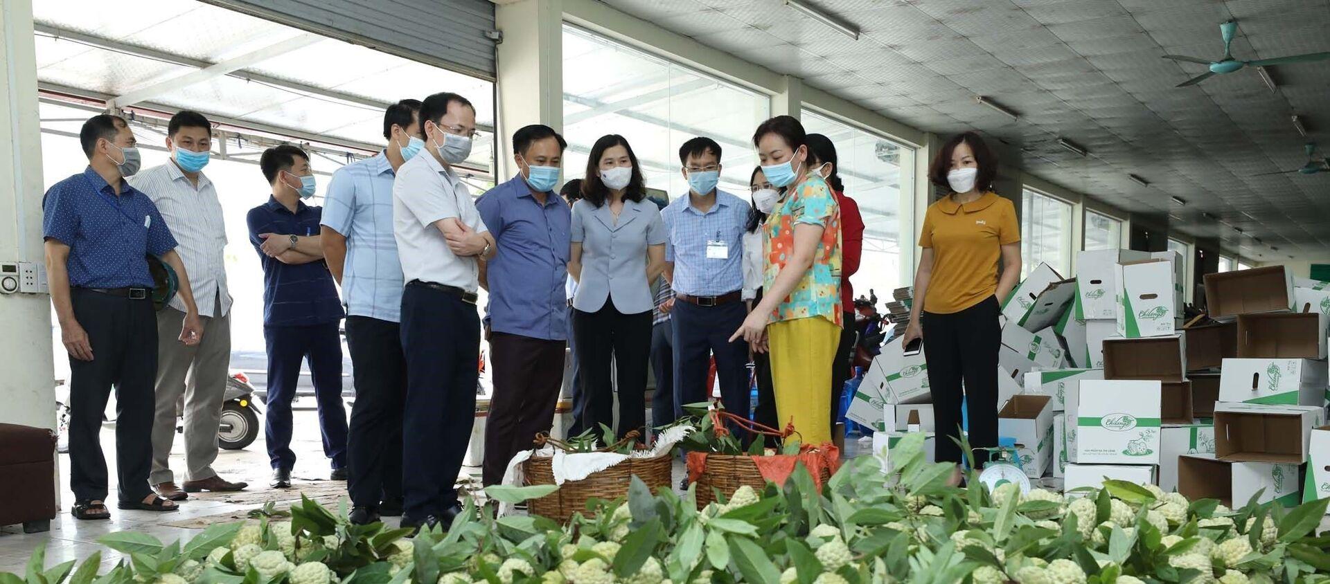 Hiện nay, na tiêu chuẩn VietGAP của Hợp tác xã nông sản huyện Chi Lăng đã bắt đầu cho thu hoạch nhưng việc tiêu thụ bị ảnh hưởng do dịch COVID-19. - Sputnik Việt Nam, 1920, 24.08.2021