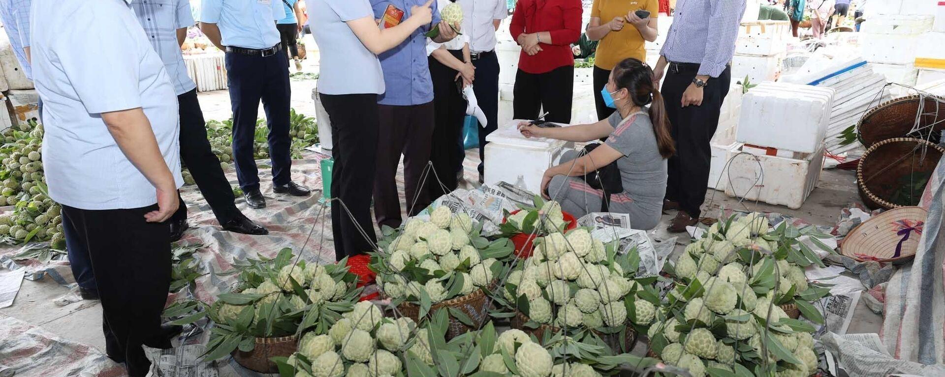 Hiện nay, na tiêu chuẩn VietGAP của Hợp tác xã nông sản huyện Chi Lăng đã bắt đầu cho thu hoạch nhưng việc tiêu thụ bị ảnh hưởng do dịch COVID-19. - Sputnik Việt Nam, 1920, 06.09.2021