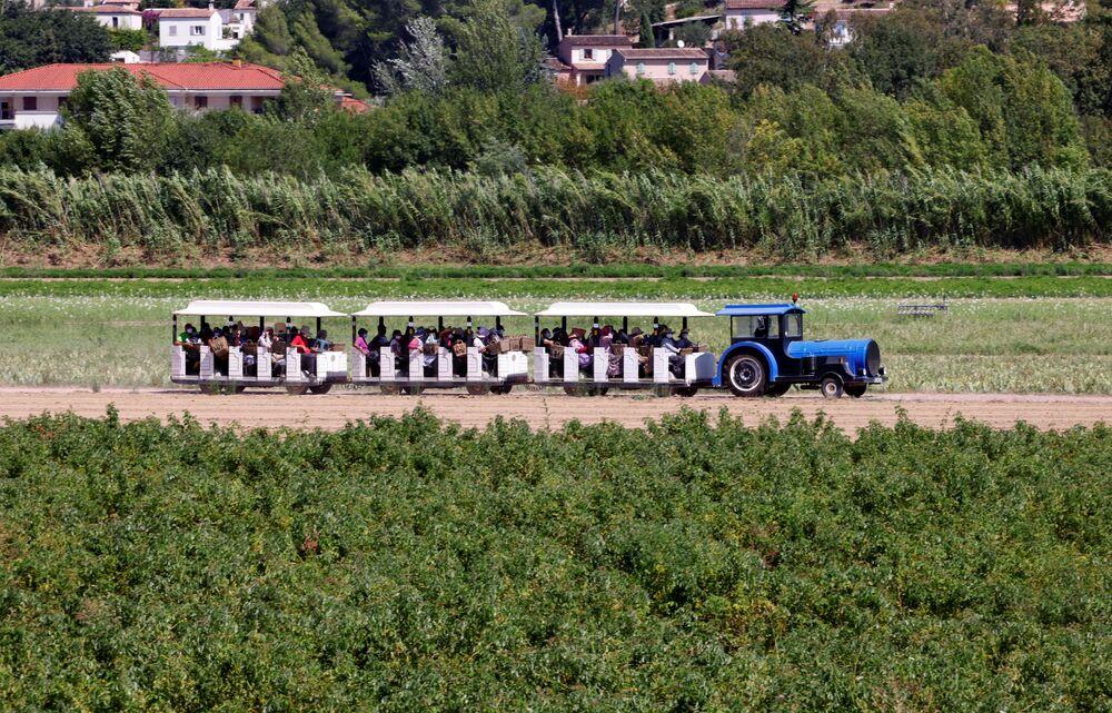 Những người hái hoa nhài trên chuyến tàu, Pháp