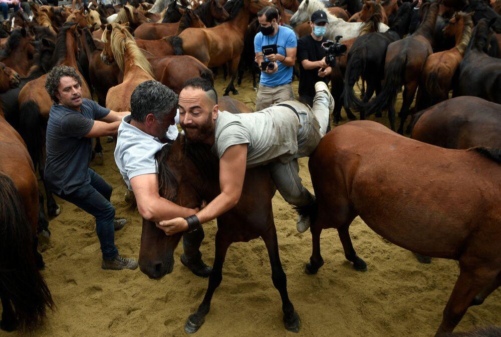 Đấu sĩ với những con ngựa hoang trong sự kiện Xén lông động vật truyền thống ở Sabucedo, Tây Ban Nha