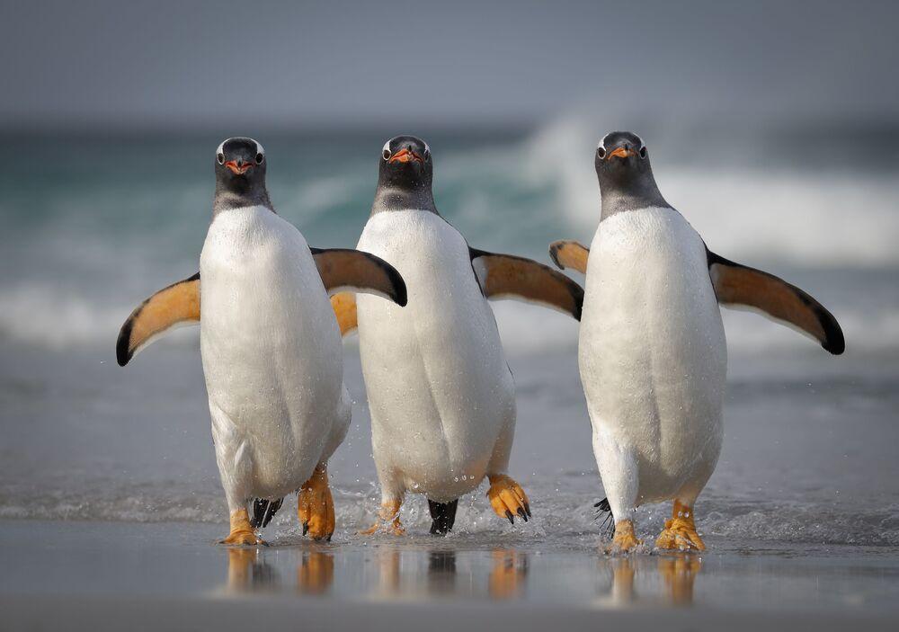 Tác phẩm Chúng tôi quá sexy đối với bãi biển này (We're Too Sexy For This Beach) Mỹ nhiếp ảnh gia Joshua Galicki, lọt vào chung kết của cuộc thi 2021 The Comedy Wildlife Photography Awards