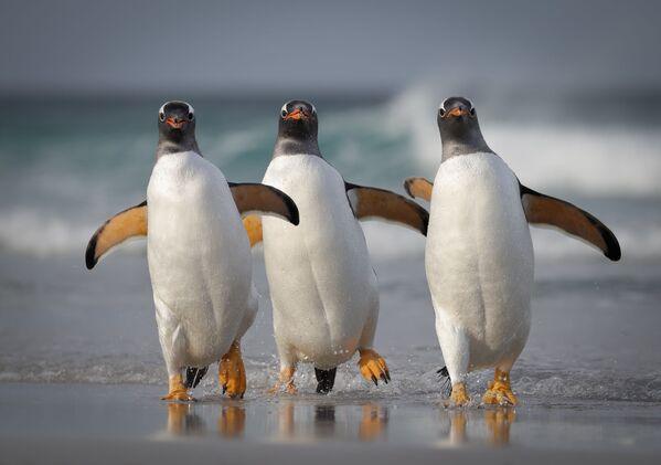 Tác phẩm Chúng tôi quá sexy đối với bãi biển này (We're Too Sexy For This Beach) Mỹ nhiếp ảnh gia Joshua Galicki, lọt vào chung kết của cuộc thi 2021 The Comedy Wildlife Photography Awards - Sputnik Việt Nam