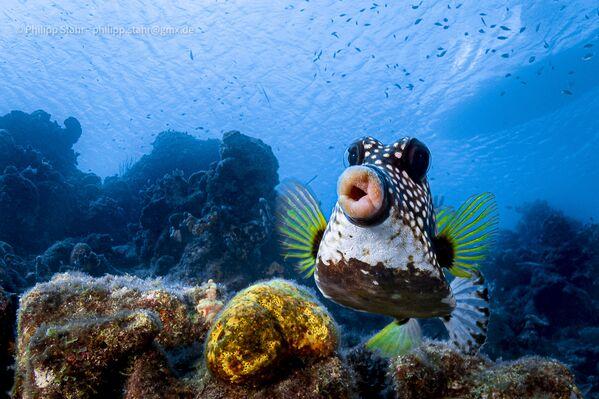 Tác phẩm Đôi môi ngọt ngào dành cho nụ hôn! (Sweet lips are for kissing!) Nhiếp ảnh gia Đức Philipp Stahr, lọt vào chung kết của cuộc thi 2021 The Comedy Wildlife Photography Awards - Sputnik Việt Nam
