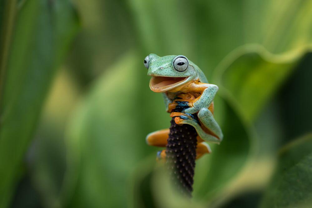 Tác phẩm Đúng, tôi đã làm điều đó (Yes, I Did It) của nhiếp ảnh gia Indonesia Dikky Oesin, chung kết của cuộc thi 2021 The Comedy Wildlife Photography Awards