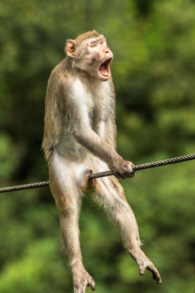 Bức ảnh Ôi! (Ouch!) Nhiếp ảnh gia Anh Ken Jensen, lọt vào chung kết của cuộc thi 2021 The Comedy Wildlife Photography Awards