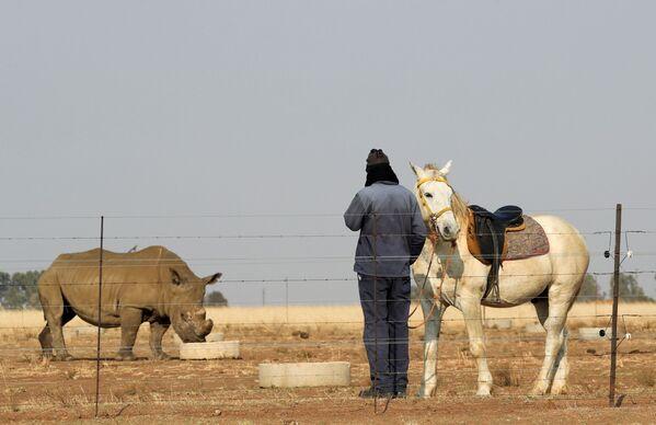 Người công nhân bên cạnh con ngựa của mình xem tê giác tại Buffalo Dream Ranch - Sputnik Việt Nam