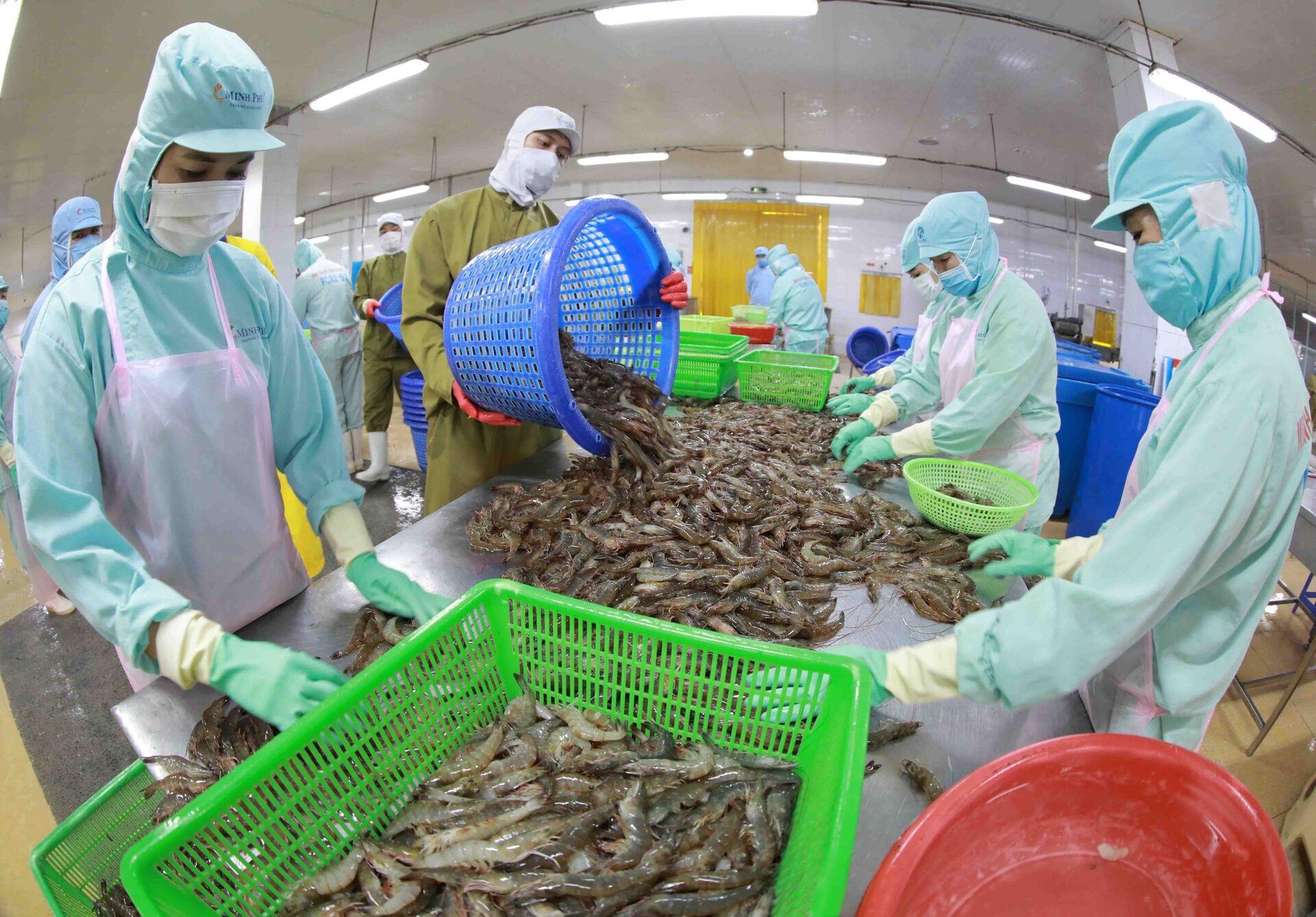 Chế biến tôm đông lạnh xuất khẩu tại nhà máy của Công ty Thuỷ sản Minh Phú Hậu Giang (Hậu Giang) - Sputnik Việt Nam, 1920, 05.10.2021