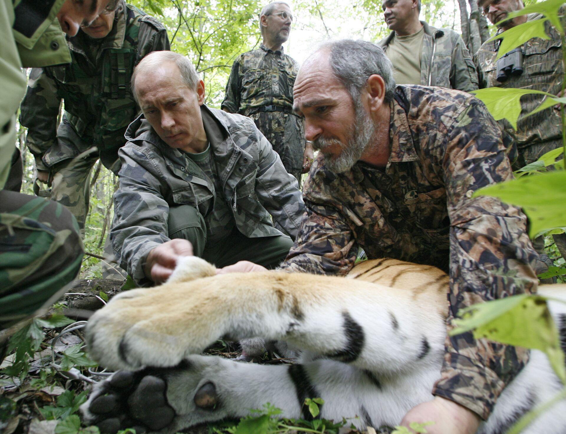 Ngày 31 tháng 8 năm 2008, ông Vladimir Putin và một nhân viên của Viện các vấn đề về sinh thái và tiến hóa mang tên A.N.Sivertsev thuộc RAS Victor Lukaretsky đang xem xét con hổ cái năm tuổi mà các nhà khoa học bắt được - Sputnik Việt Nam, 1920, 05.10.2021