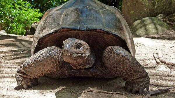 Rùa khổng lồ - Sputnik Việt Nam