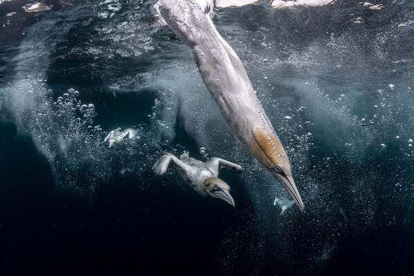 Ảnh của Henley Spiers - Người đoạt giải nhì cuộc thi Nhiếp ảnh gia đại dương năm 2021 - Sputnik Việt Nam