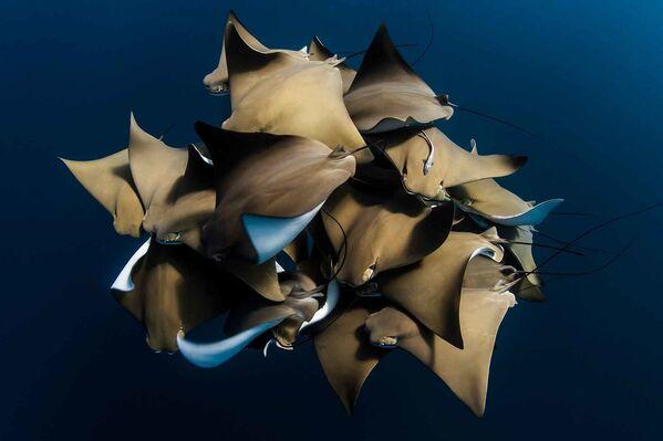 Ảnh từ bộ sưu tập của của Alex Kydd - giải ba trong «Giải thưởng Hồ sơ Tập thể» (Collective Portfolio Award ) của cuộc thi Nhiếp ảnh gia đại dương năm 2021 - Sputnik Việt Nam