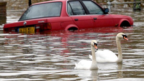 Những con thiên nga trên con phố ngập lụt ở phía tây London - Sputnik Việt Nam