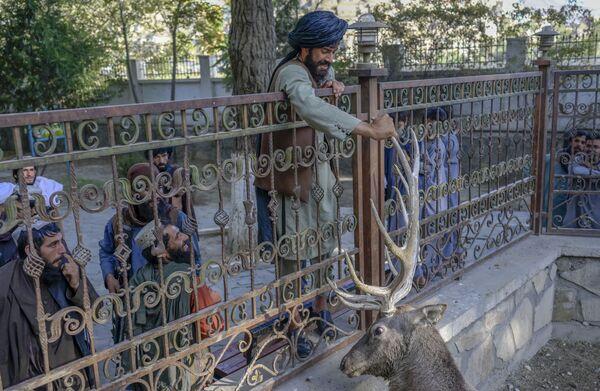 Chiến binh Taliban (tổ chức khủng bố bị cấm ở Nga) vuốt ve con hươu trong chuồng ở Vườn thú Kabul - Sputnik Việt Nam